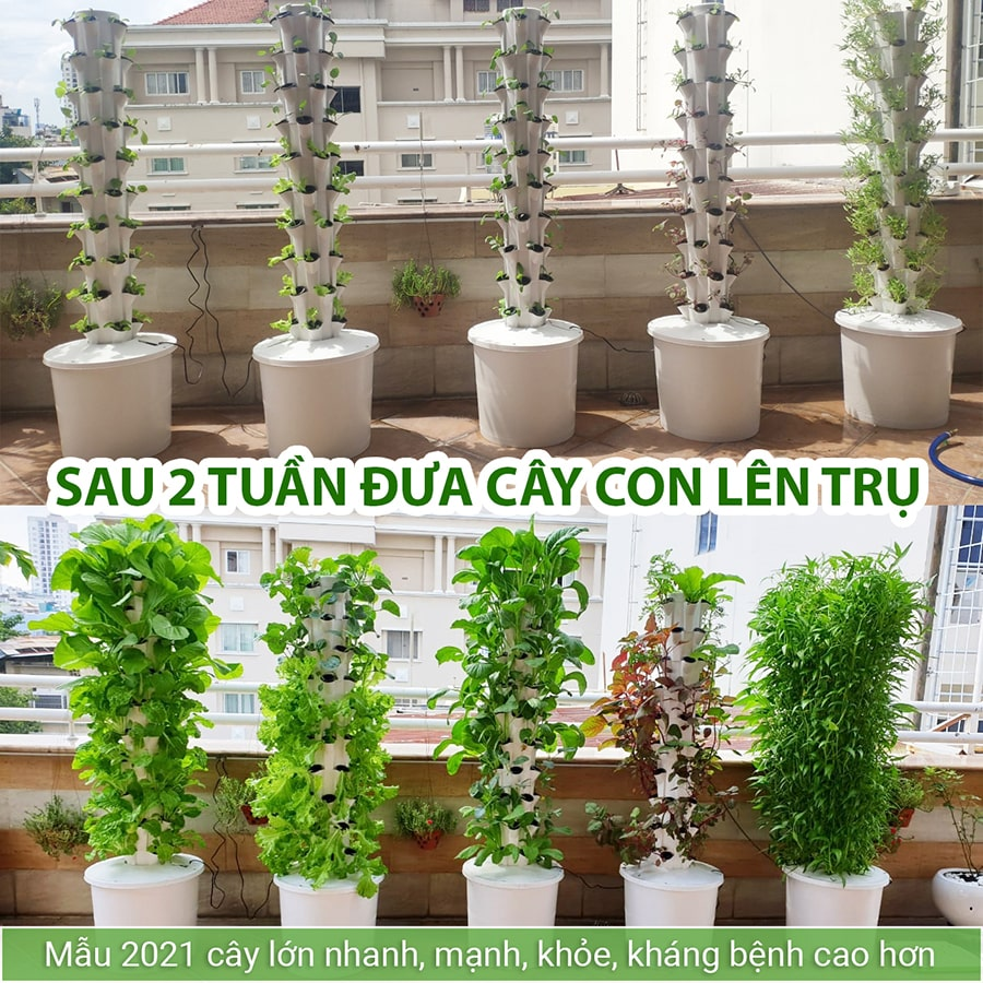Hinh anh Slider Thuy Canh Bio